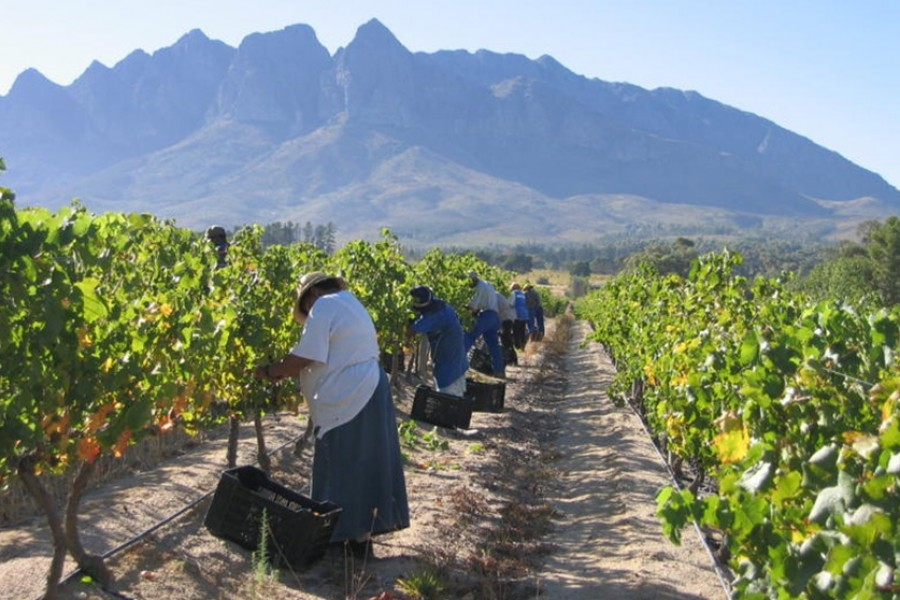 Neue Welt mit Tradition: Weinherkunft Südafrika
