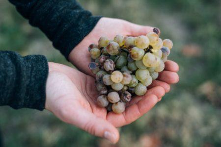 Weinwissen: Nachhaltiger Weinbau