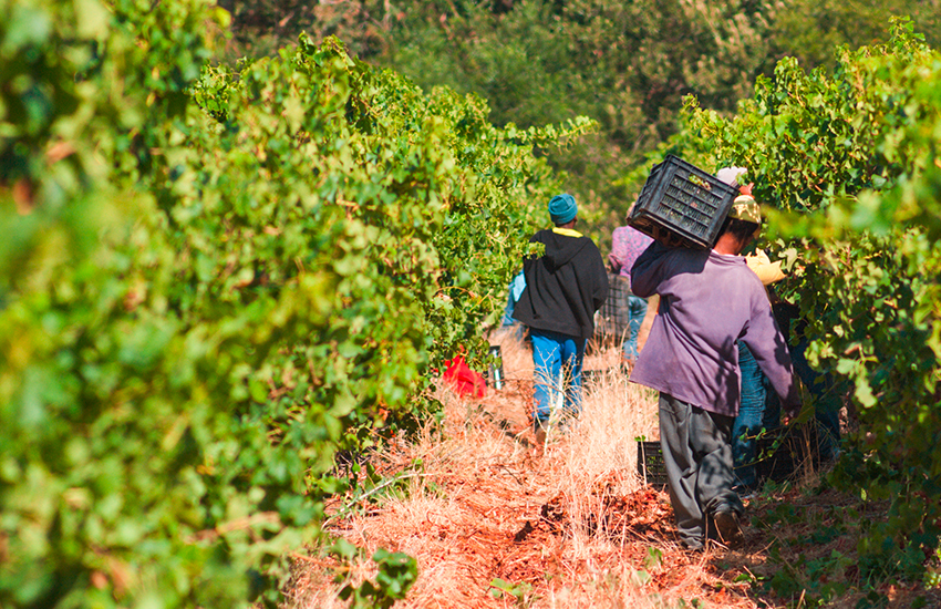 Napier Weine aus Südafrika in Kürze Fairtrade zertifiziert